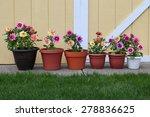 dahlia flower planter row for... | Shutterstock . vector #278836625