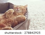 Stock photo a ginger cat sleeps in his soft cozy bed on a floor carpet soft focus 278842925