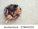 Couple Cats Sleep And Hugging...