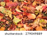 Brown Yellow Red Fall Leaves...