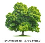 green maple tree isolated on... | Shutterstock . vector #279159869