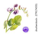 Sweet Pea Flower   Watercolour...