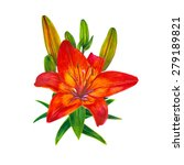 Red Lily With Buds Isolated On...