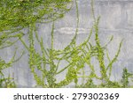 cement wall and leaves... | Shutterstock . vector #279302369