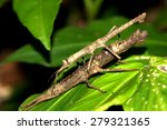 Branch Insect Mating On Leaf