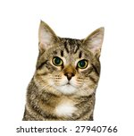 cat  a portrait | Shutterstock . vector #27940766