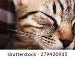 Stock photo portrait of sleeping cat closeup 279420935