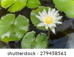 beautiful white lotus flower | Shutterstock . vector #279458561