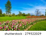 Tulips In Spring Park