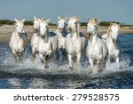 white camargue horses galloping ... | Shutterstock . vector #279528575