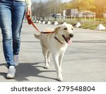 Stock photo owner and labrador retriever dog walking in the city 279548804