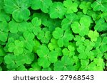 Three Shamrock Leaves In A...