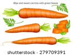 carrots with leaves and slices. ...   Shutterstock .eps vector #279709391