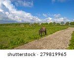 Herd Of Horses In Nature Under...