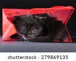 small black and white kitten... | Shutterstock . vector #279869135