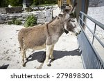 donkey behind his fence in... | Shutterstock . vector #279898301