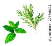 vector botanical illustration...   Shutterstock .eps vector #279908375