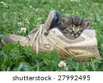 Kitten In The Shoe