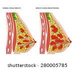 breasts during breastfeeding | Shutterstock .eps vector #280005785
