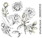 Stock vector flower set highly detailed hand drawn roses 280005935