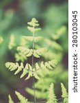 young spring fern leaves on