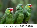 parrot bird sitting on the perch | Shutterstock . vector #280183784
