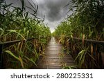 Wooden Path Trough The Reed...