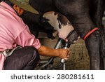 farm worker milking cows at... | Shutterstock . vector #280281611
