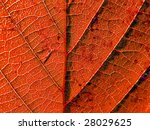 texture of the wood sheet | Shutterstock . vector #28029625