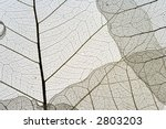 dried leaves | Shutterstock . vector #2803203