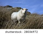 Views Around Capel Curig And...