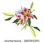 bouquet of pink lilies is... | Shutterstock . vector #280393391