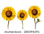 sunflower low poly concept. | Shutterstock .eps vector #280394291
