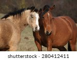 Two Horses Standing Together O...