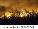 sugar cane fire in brazil | Shutterstock . vector #280462661
