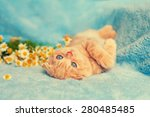 Stock photo cute kitten on blue blanket 280485485
