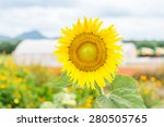 sunflower is a beautiful flower ... | Shutterstock . vector #280505765