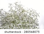 Gypsophila  Baby's Breath...