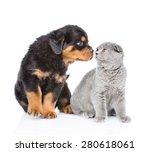 Rottweiler Puppy Sniffing...