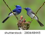 family of black naped monarch ... | Shutterstock . vector #280648445