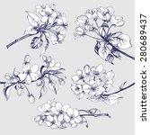 Flower Set  Sketch Of ...