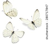 Three white butterfly  isolated ...