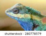 Blue Lizards Head Side View...