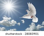 White Dove Flying On Clear Blue ...