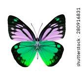 Beautiful Light Green Butterfl...
