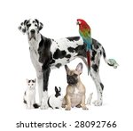 Stock photo group of pets dog cat bird reptile rabbit in front of a white background 28092766