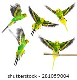 Budgerigar. Green Yellow Parro...