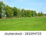 stork on green field over blue... | Shutterstock . vector #281094725