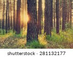 sunset in the woods  retro film ... | Shutterstock . vector #281132177