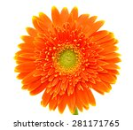 Orange Gerbera Flower Isolated...